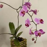 Правила ухода за орхидеями в домашних условиях
