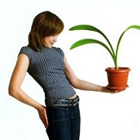 Какие растения ставить в доме
