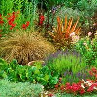 Долго цветущие цветы для сада